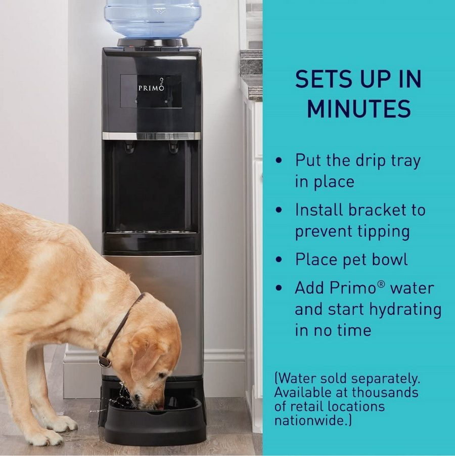A dog drinking water from Primo Top Load Water Dispenser with Pet Station